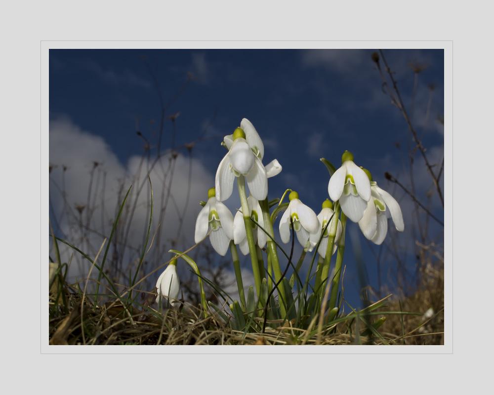 Sehnsucht nach Frühling - Nostalgie de printemps