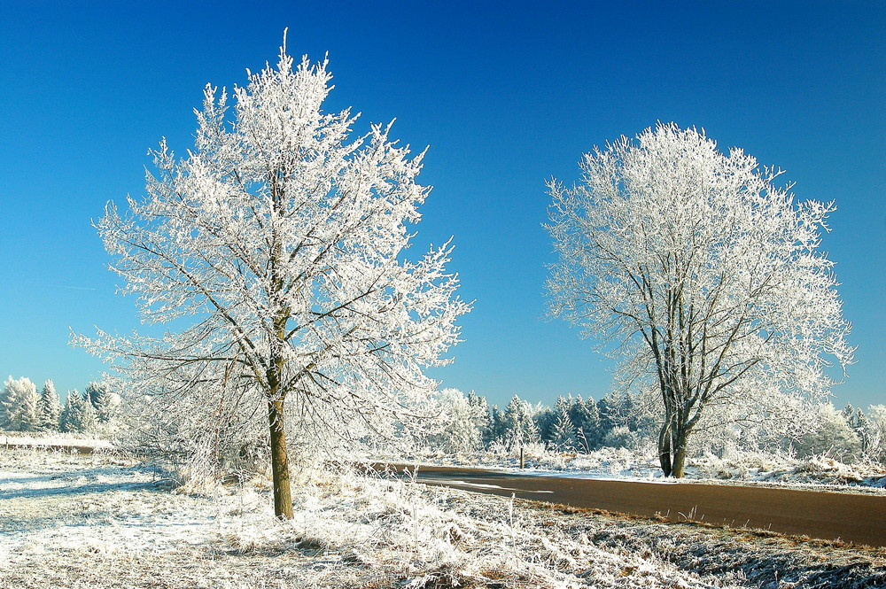 Sehnsucht nach Schnee!