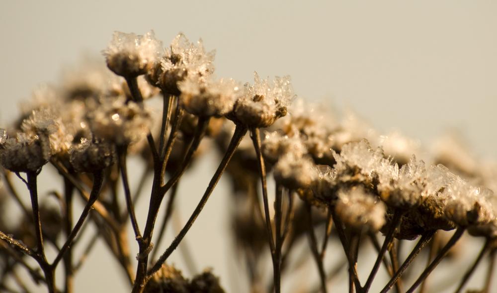 Sehnsucht nach Winter #01