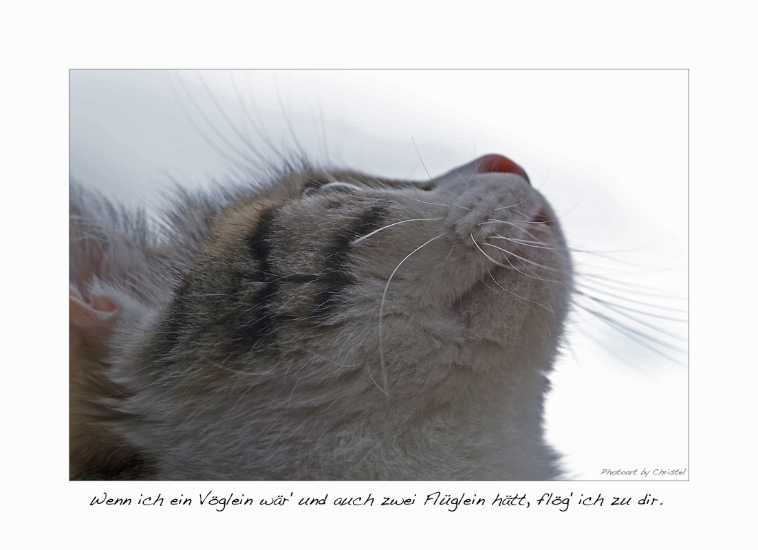 sehnsuchtsvoller Katzenblick