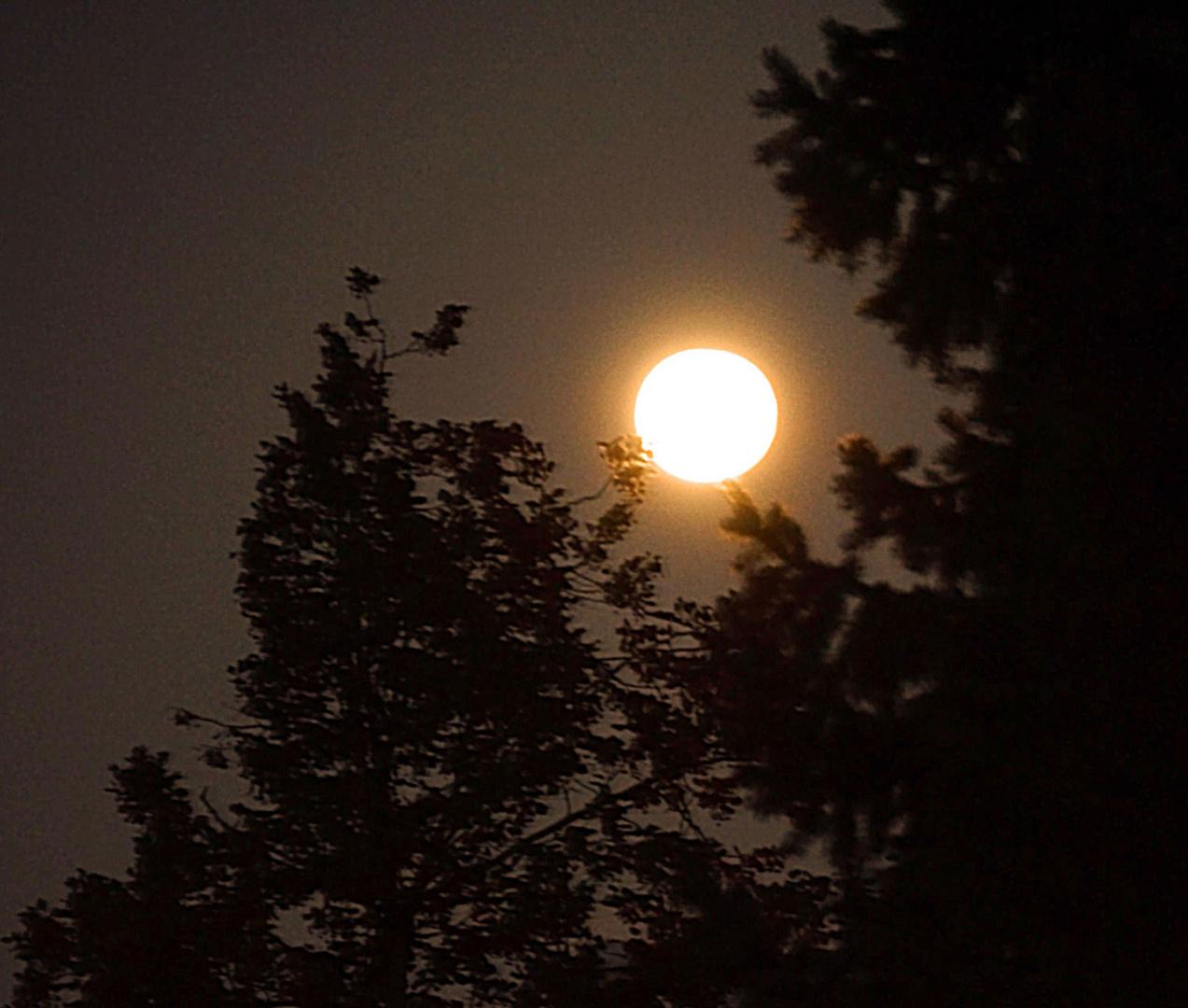 Seht ihr den Mond dort stehen ?...........
