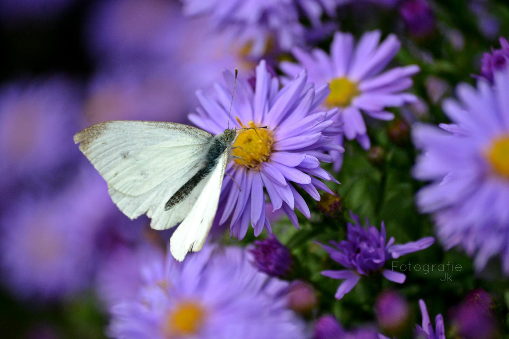 Sei frei wie ein Schmetterling