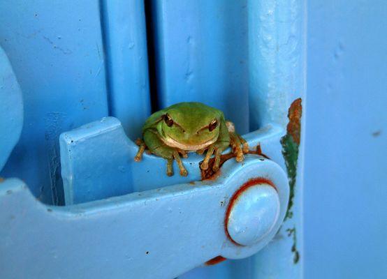 sei kein frosch !!!