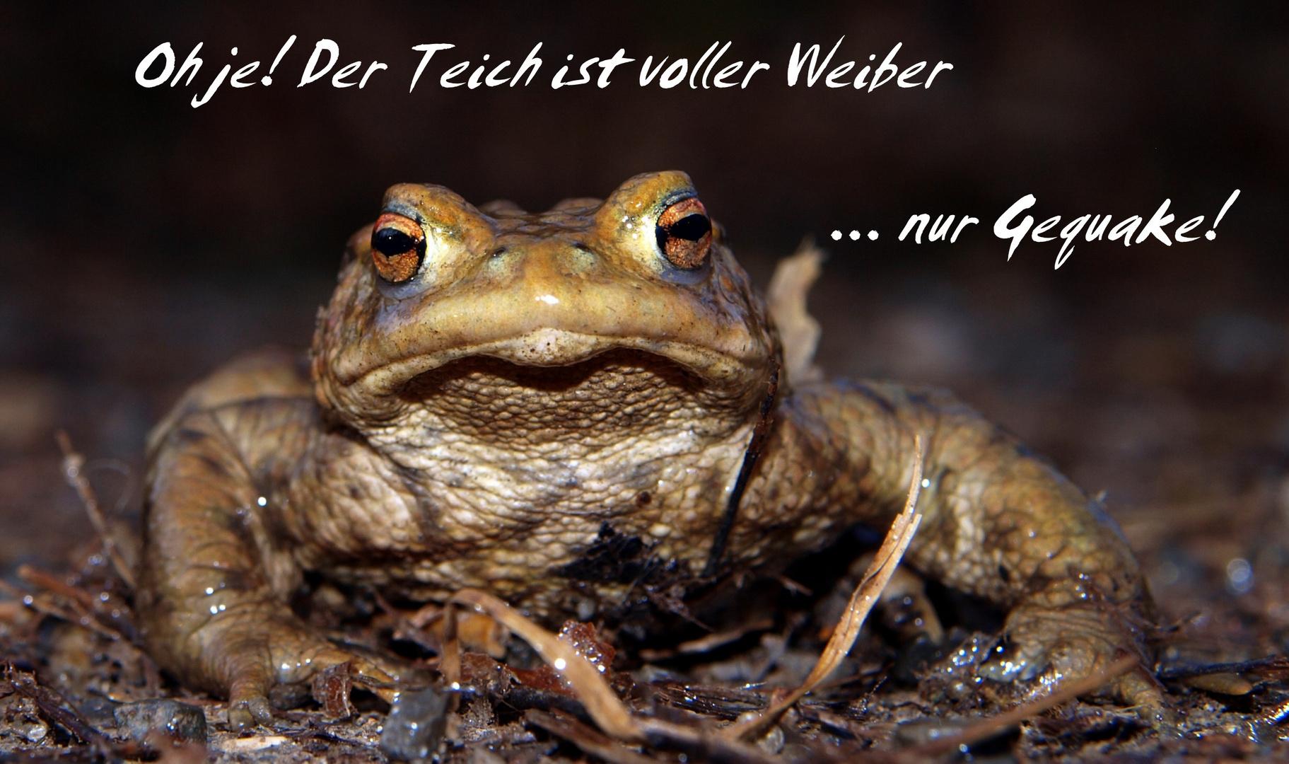 Sei kein Frosch...