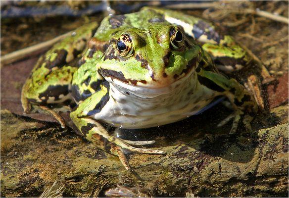 Sei kein Frosch und küss mich ...