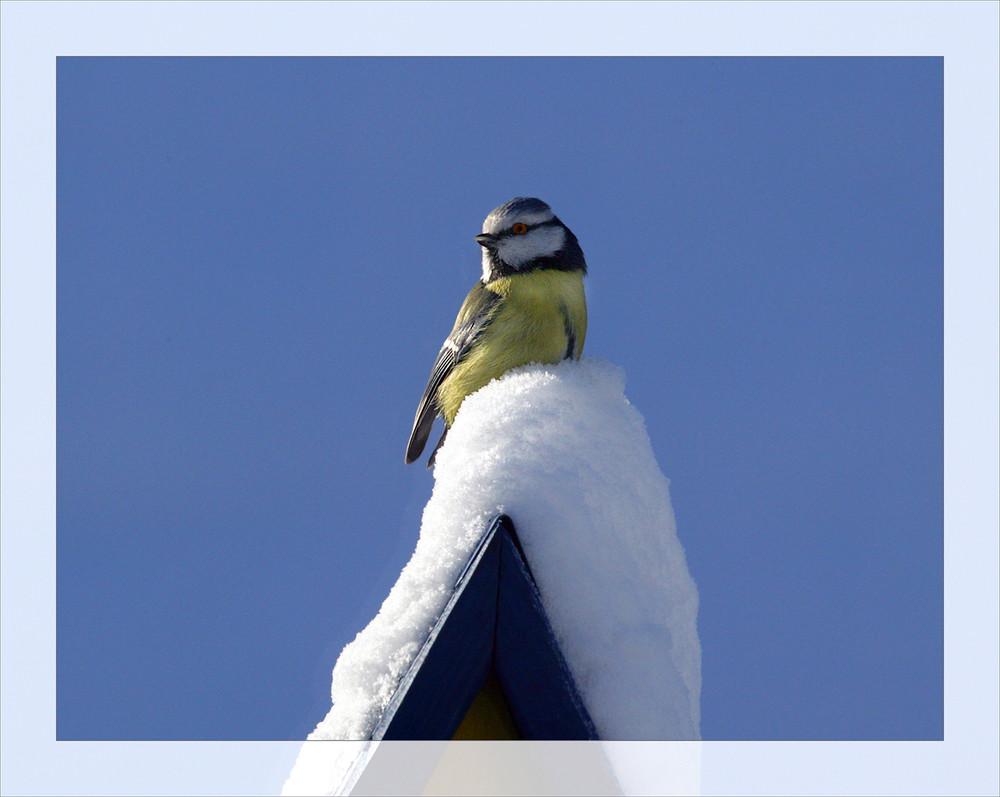 Seid gut zu Vögeln!