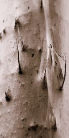 Seiden spinnen -5-