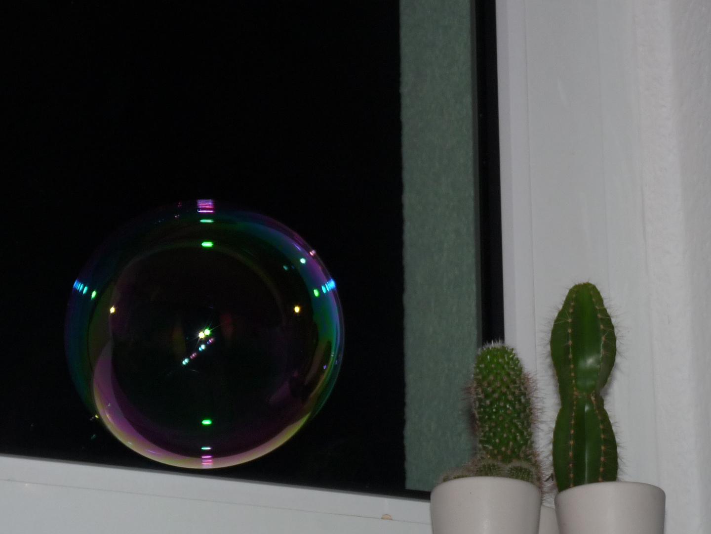 Seifeblase vs. Kaktus