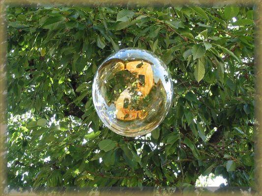 Seifenblase im Kirschbaum vor'm Haus