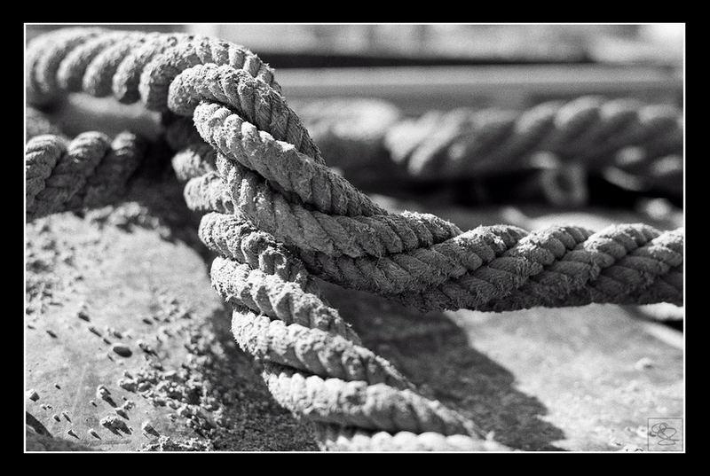 Seil in Baumulde