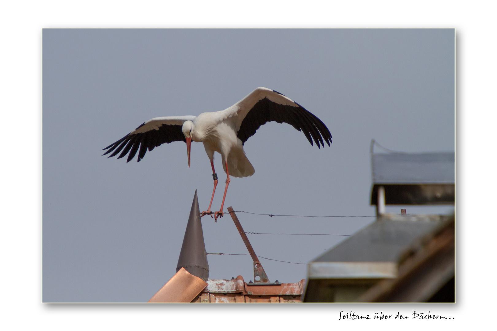 Seiltanz über den Dächern