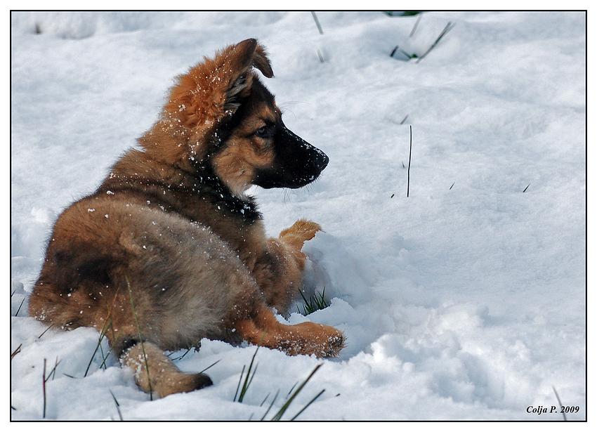 Sein erster Schnee