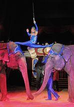 Sein Herz gehört den Elefanten