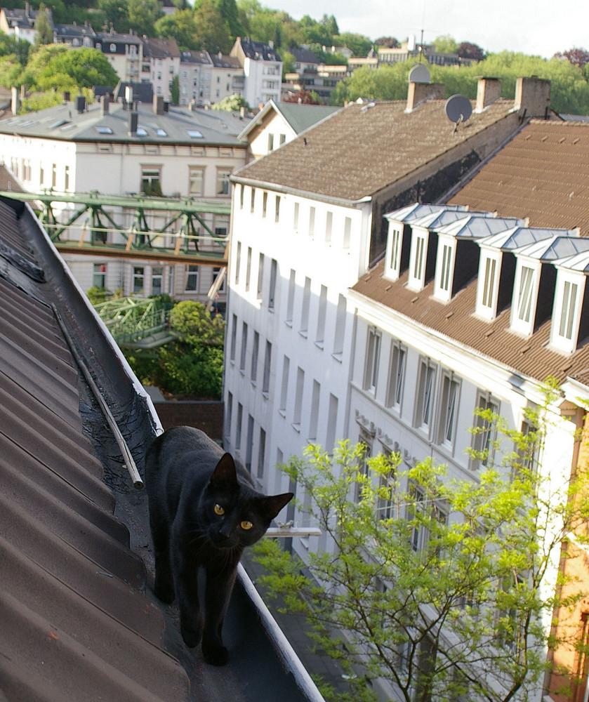 Sein Revier auf den Dächern