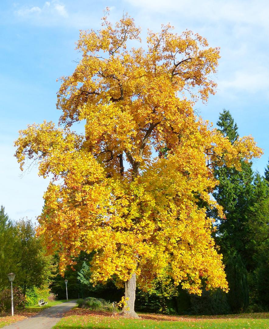 Sein schönstes Herbstkleid ...