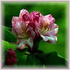 Seine Blüten...