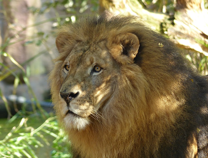 Seine Majestät der König