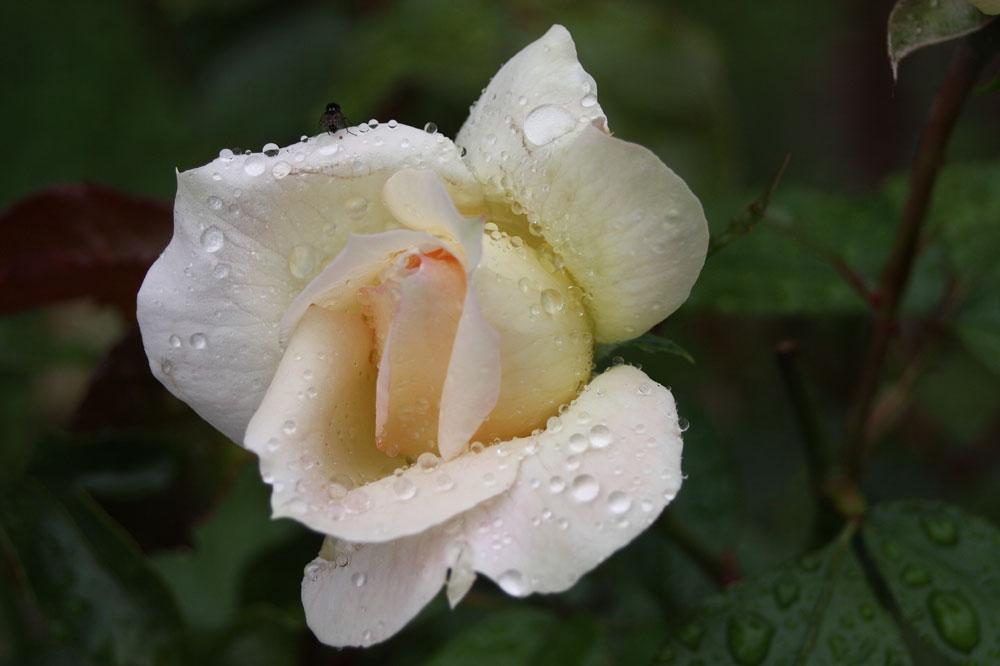 selbst die Blumen heulen