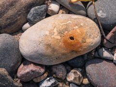 Selbst ein Stein kann lernen zu rosten
