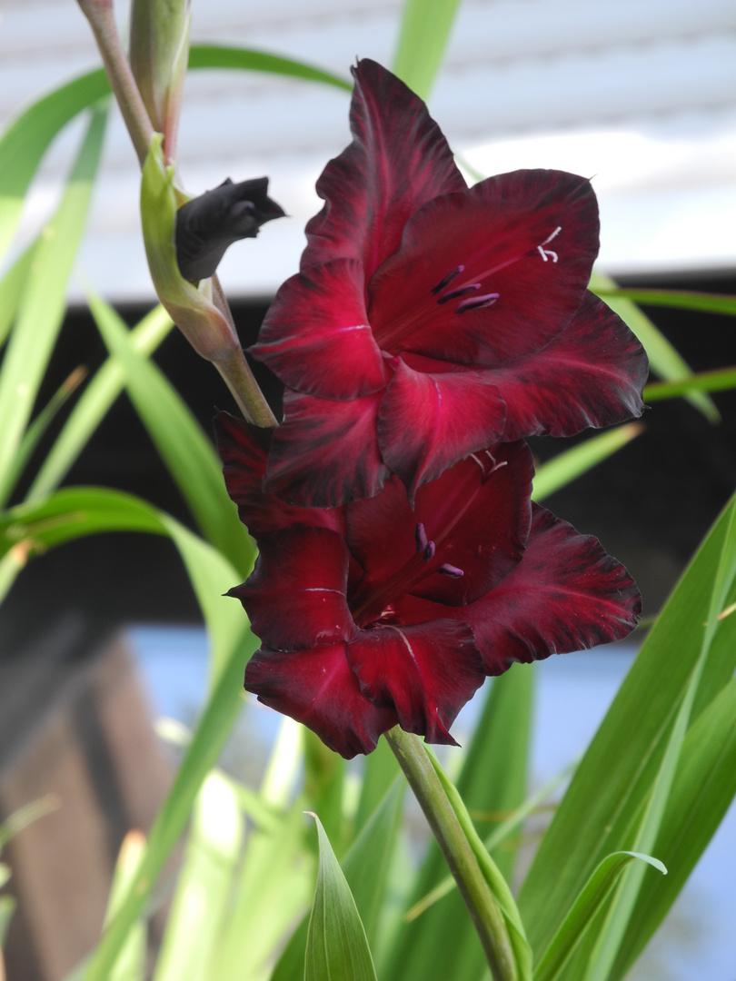 Selbst geplanze Blume :)