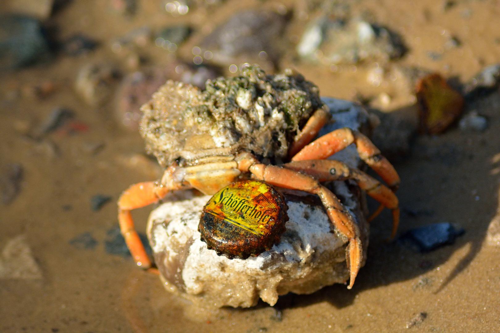 Selbst Krabben mögen Schöfferhofer