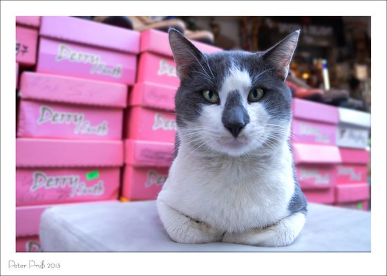 Selbstbewußte Katze