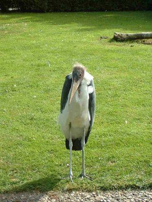 Selten komische Vögel
