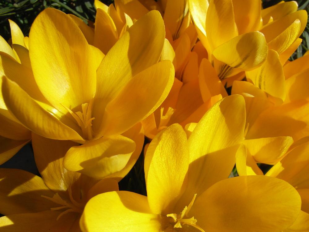 Seltener Anblick im Garten Mitte Februar 2008