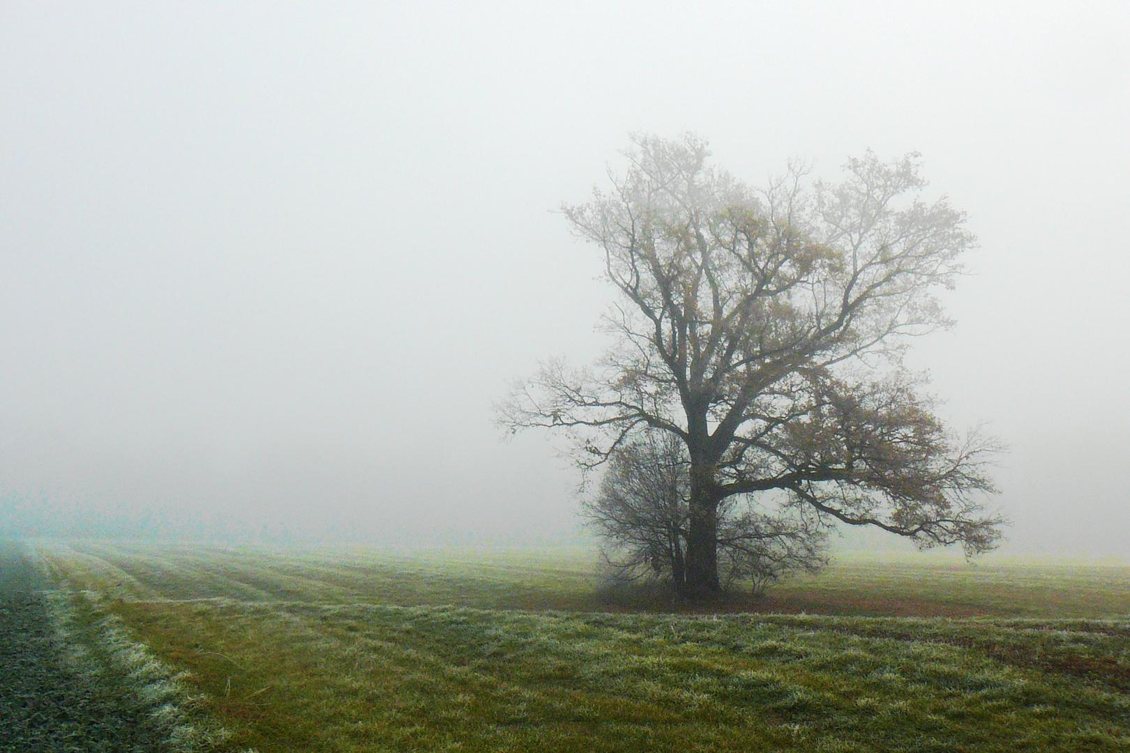 Seltsam, im Nebel zu wandern...