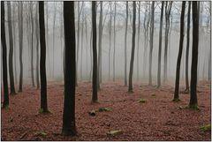 Seltsam im Nebel zu wandern...
