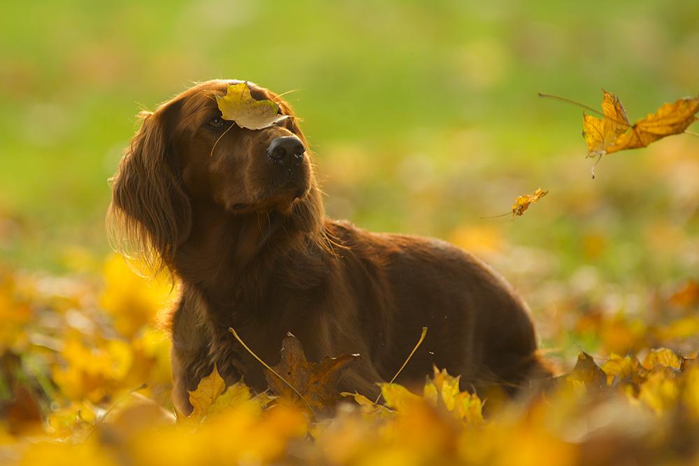 Seltsam, wie die Blätter fallen!