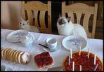 Seltsame Geburtstagsgäste