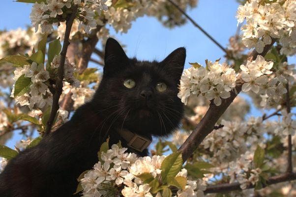 Seltsame Kirschblüte.