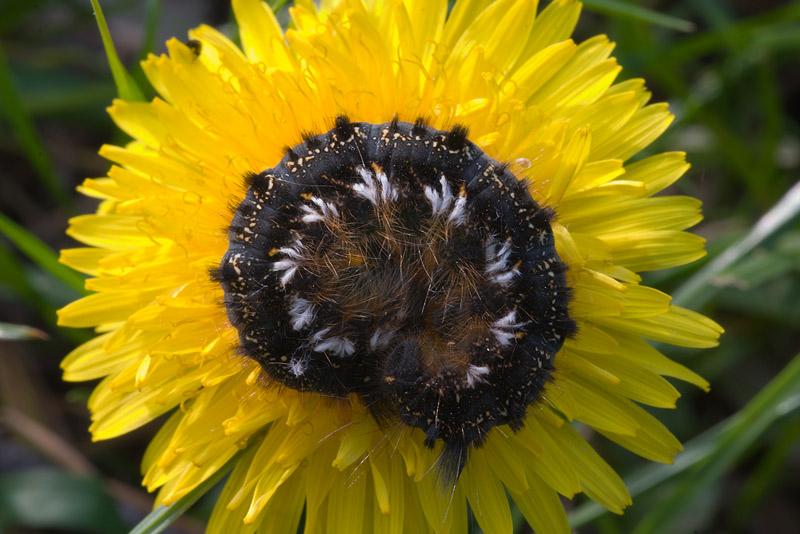 seltsamer Blütenschmuck
