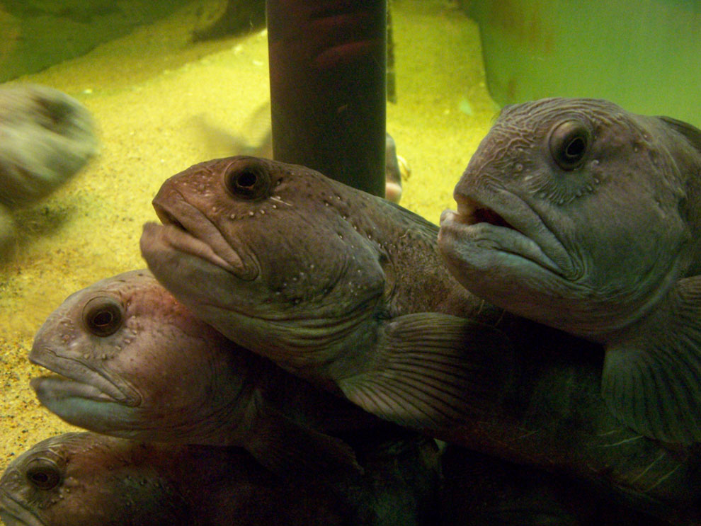 Seltsamer Fisch