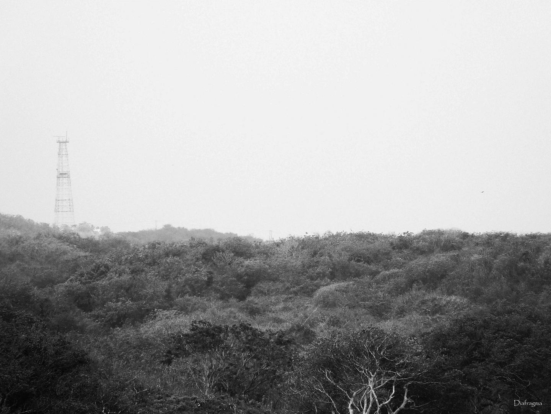 Selva allanada
