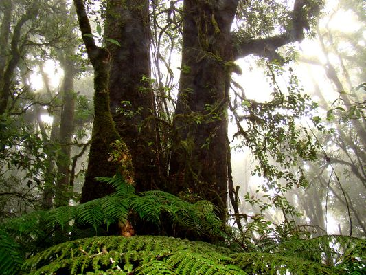 selva húmeda