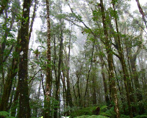 Selva húmeda II