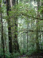 Selva Húmeda III
