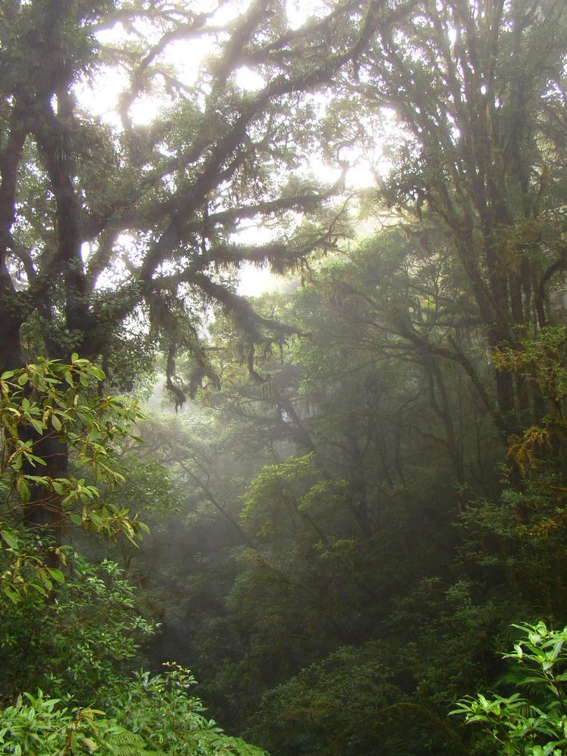 Selva Húmeda IV