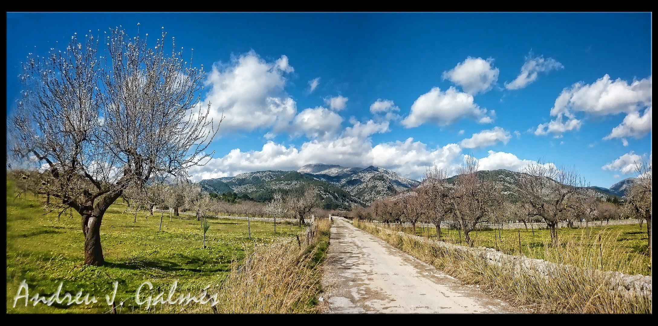 Selva primeveral - Mallorca
