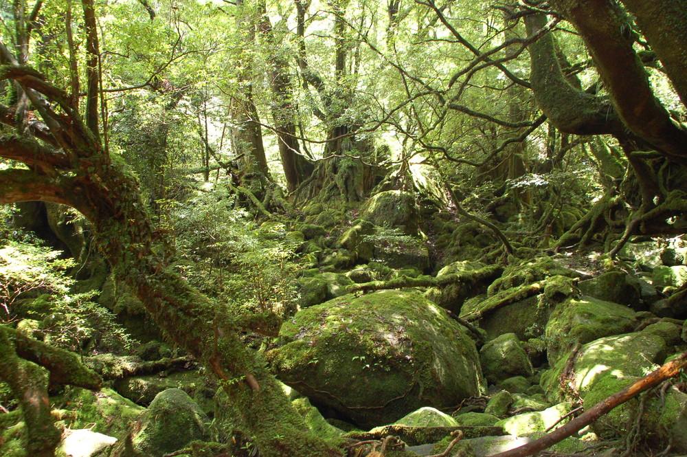 Selva virgen imagen foto naturaleza abstracta naturaleza fotos de fotocommunity - Mas goy fornells de la selva ...