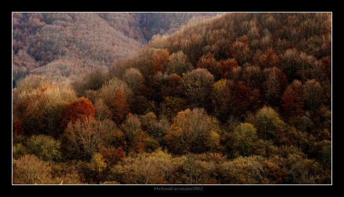 selve d'autunno