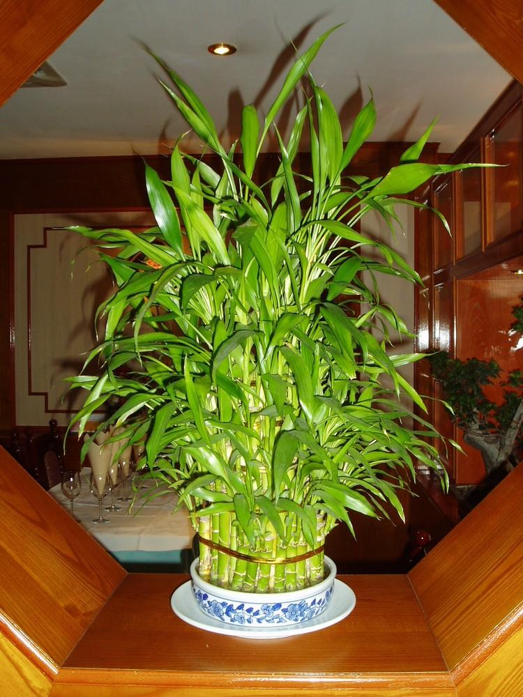 semplice.......Bambù..........