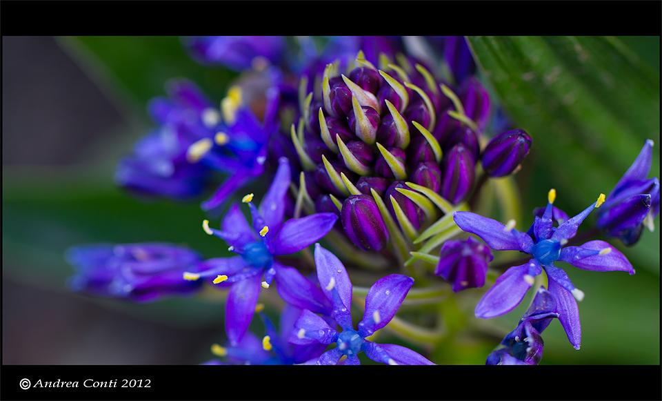 semplicemente, un fiore