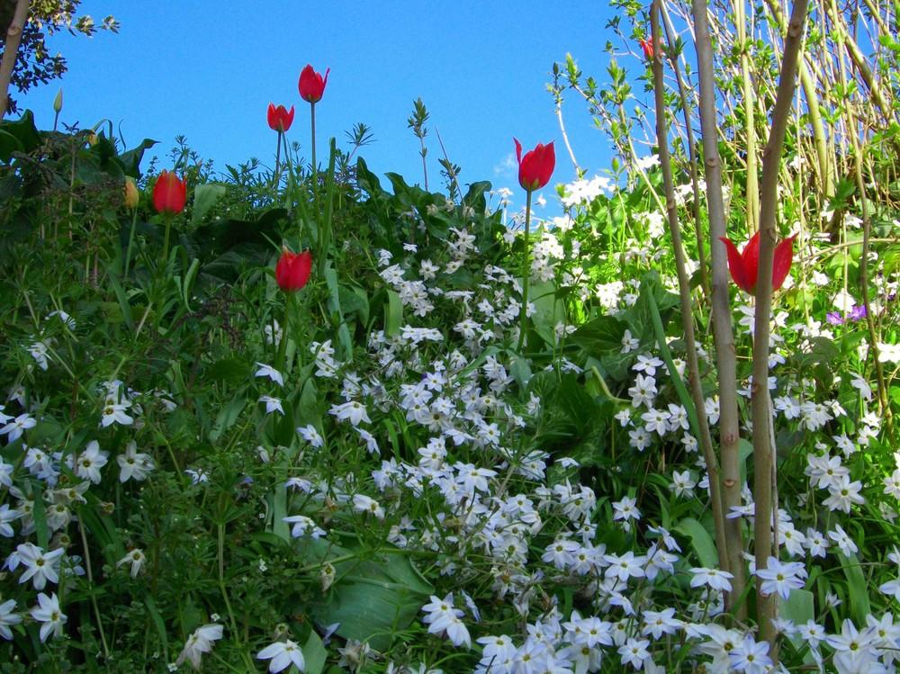 Semplici fiori di campo foto immagini piante fiori e for Fiori semplici
