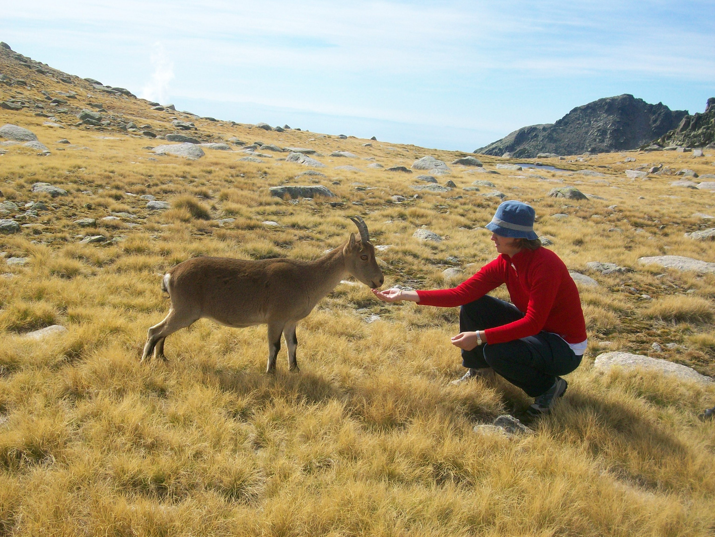 Senderismo por Gredos - Morezón Y Cabeza Nevada