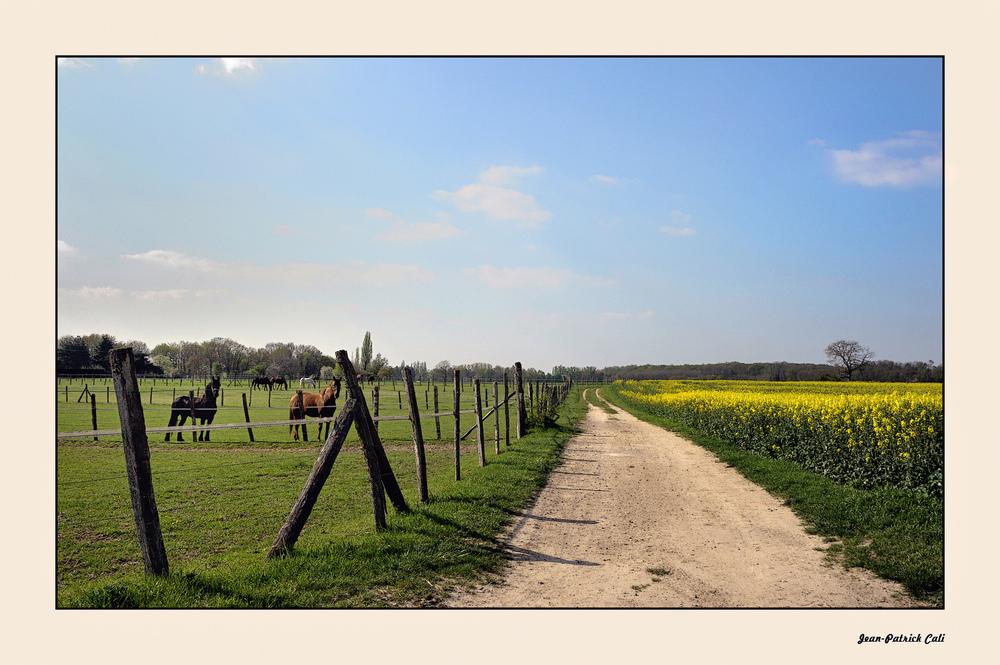 Sentier de campagne