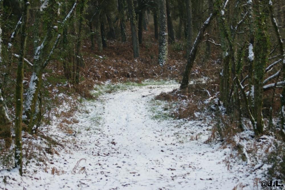 SENTIER FORESTIER DES LANDES SOUS LA NEIGE
