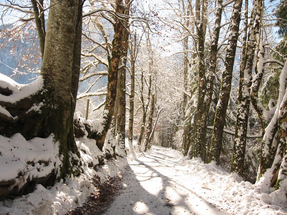 sentier sous la neige en Chartreuse